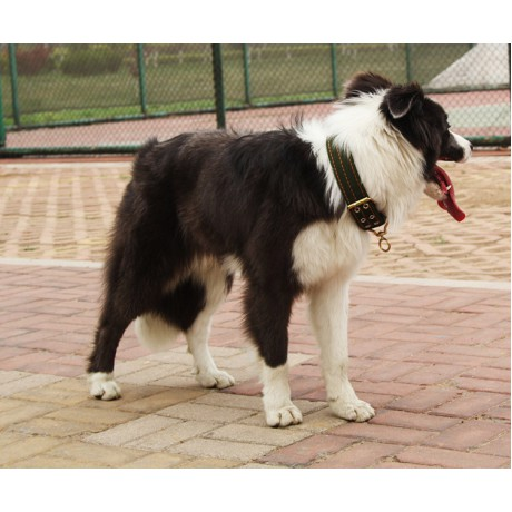 Dog Collar Army Green